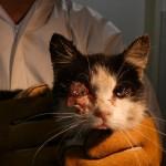 Lilly5-150x150 31 Hunde und 12 Katzen beschlagnahmt - erbärmliche Zustände