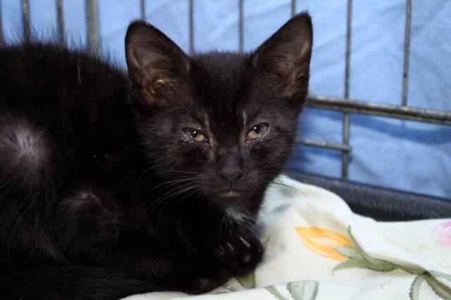 Mädchen-1-1 Messihaushalt – vierzehn kranke Katzen gerettet – Tierschutz-Alltag