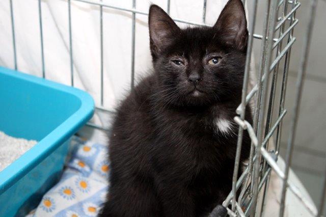 Mädchen-3-1 Messihaushalt – vierzehn kranke Katzen gerettet – Tierschutz-Alltag