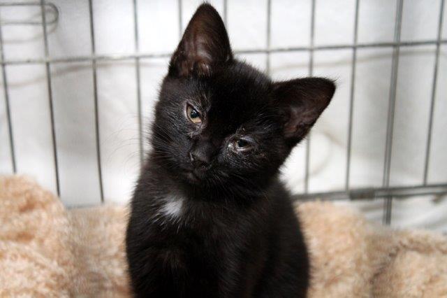 Mädchen-4-2-Finia Messihaushalt – vierzehn kranke Katzen gerettet – Tierschutz-Alltag