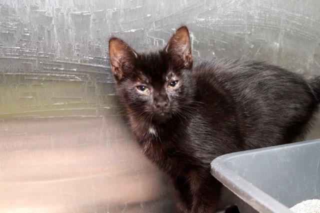 Mädchen-5 Messihaushalt – vierzehn kranke Katzen gerettet – Tierschutz-Alltag