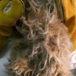 P1030129-150x150 31 Hunde und 12 Katzen beschlagnahmt - erbärmliche Zustände