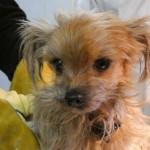P1030141-1-150x150 31 Hunde und 12 Katzen beschlagnahmt - erbärmliche Zustände