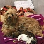 WhatsApp-Image-2017-11-25-at-08.42.05-150x150 31 Hunde und 12 Katzen beschlagnahmt - erbärmliche Zustände