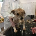WhatsApp-Image-2017-12-01-at-13.38.09-150x150 31 Hunde und 12 Katzen beschlagnahmt - erbärmliche Zustände