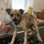 WhatsApp-Image-2017-12-01-at-13.38.11-150x150 31 Hunde und 12 Katzen beschlagnahmt - erbärmliche Zustände