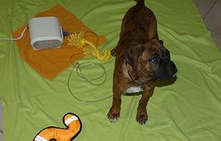 beitragsbild-carlos-hund-inhalator-spielzeug-1 Abgeschlossene Tierschutz-Projekte