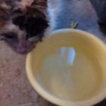 beitragsbild-luisa-persermix-verwahrlost-wasser-150x150 Hilfe für Louisa - Persermix Katze in Not
