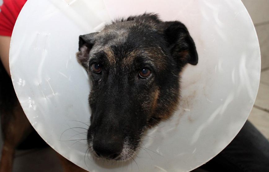 beitragsbild-update-ruby-ohr-operation Unterstützen Sie das Tierschutzliga-Dorf