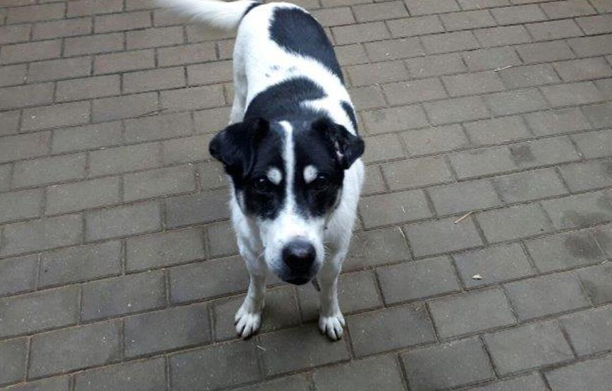beitragsbild-vier-rumänische-hunde Abgeschlossene Tierschutz-Projekte