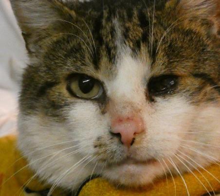 kater2 31 Hunde und 12 Katzen beschlagnahmt - erbärmliche Zustände