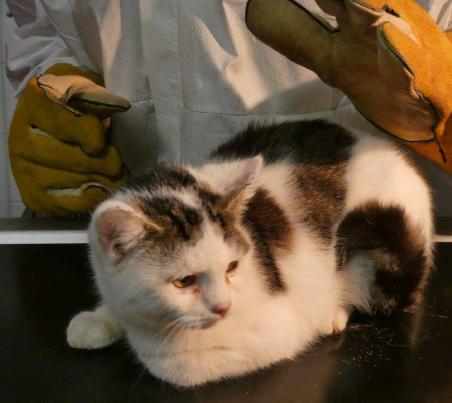 kater4 31 Hunde und 12 Katzen beschlagnahmt - erbärmliche Zustände