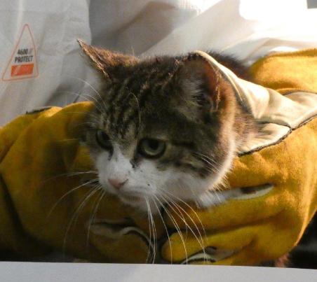 katze1 31 Hunde und 12 Katzen beschlagnahmt - erbärmliche Zustände