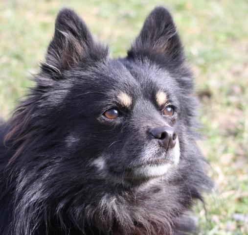 lucky Unser Hundeauslauf braucht ein Dach - Tierheim Unterheinsdorf