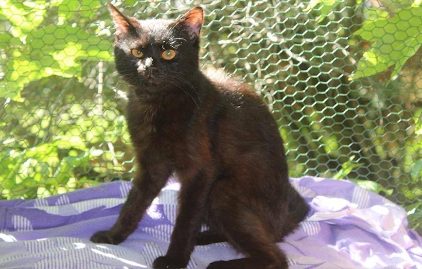 schwarzer-kater-Anton-vermittelt Glücklich vermittelt - Katzenstation München