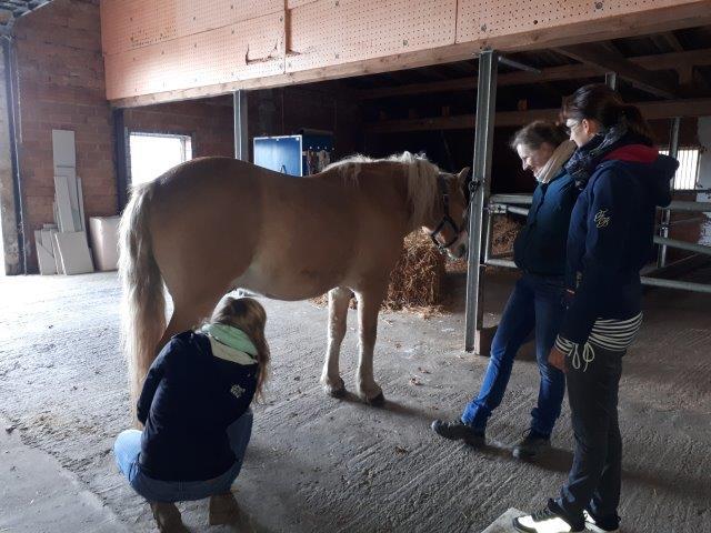 wardenburg2 Homöopathie für Pferde - Seminare in Wardenburg