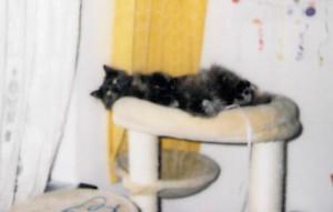 Katze-Sweetie-liegt-auf-dem-kratzbaum-300x191 Sweetie, ehemals Esmeralda ist jetzt glücklich