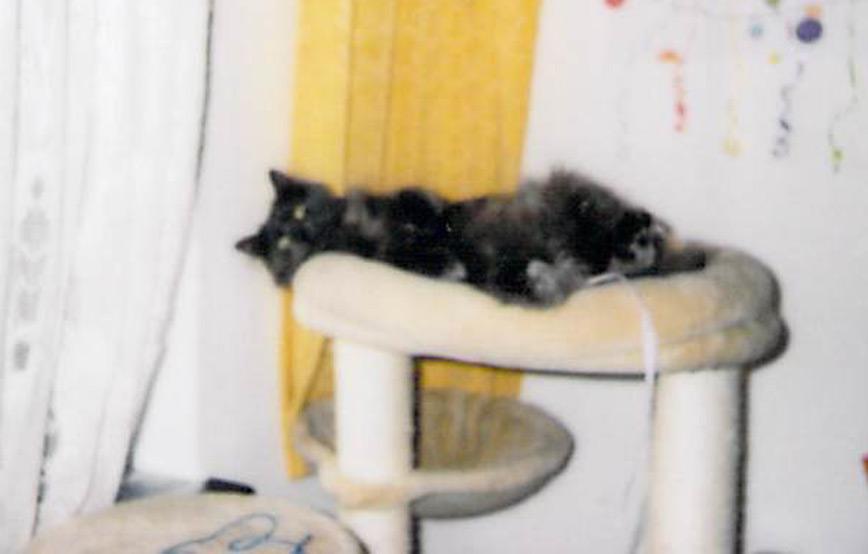 Katze-Sweetie-liegt-auf-dem-kratzbaum Petra braucht ihr Kissen