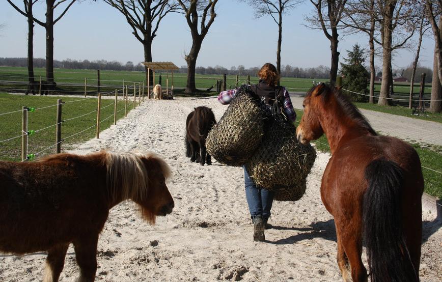 Tierschutzhof-wardenburg-sucht-verstärkung Tierschutzhof Wardenburg