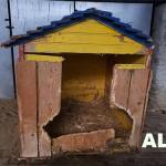 alte-hundehütte-kaputt-150x150 Eine neue Hundehütte für die Hunde von Unterheinsdorf