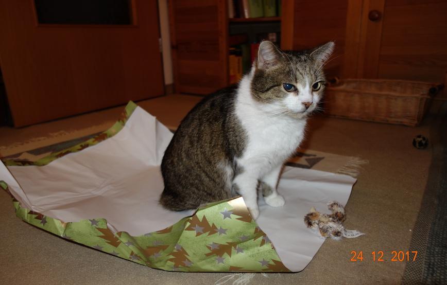 katze-sitzt-auf-geschenkpapier Tierische Geschichten - Katzenstation München
