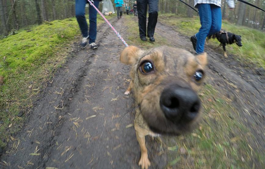 Hundewanderung-am-Karfreitag-Beitrag Hundewanderung am Karfreitag
