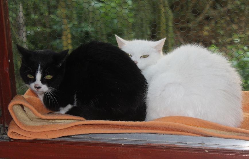 Katzen-Charly-Sunny-sitzen-am-fenster Glücklich vermittelt - Katzenstation München