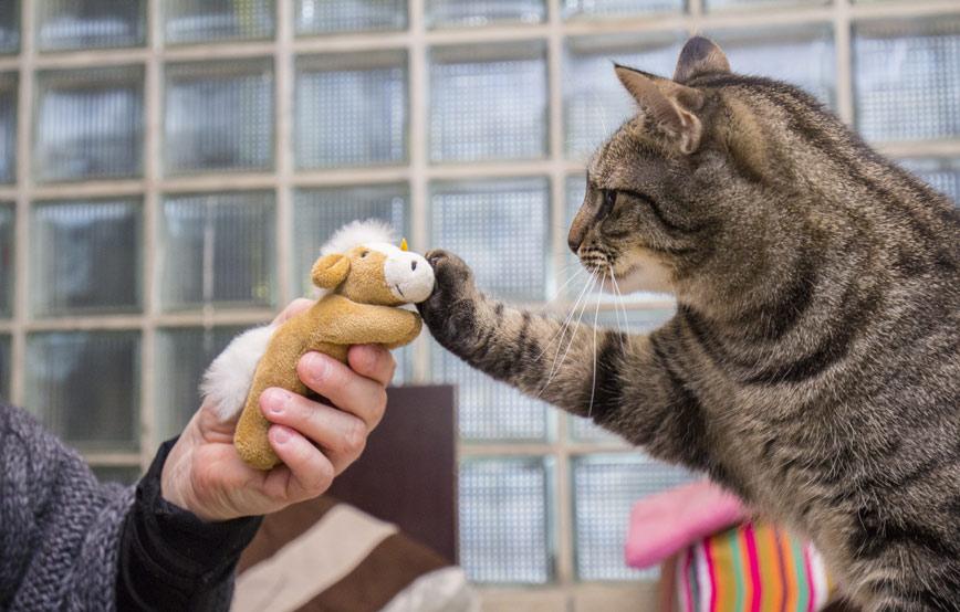 Katzenbild-mit-teddy Wochenendseminar mit Carmen Schell