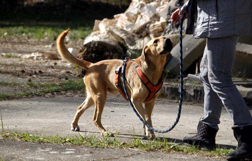 Vito-beim-Spaziergang Vito (SH144/16)