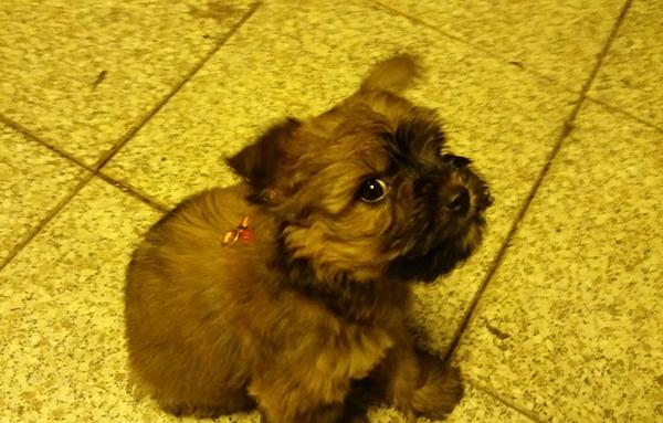beitragsbild-floffis-tagebuch-tag2 Floffis Hundetagebuch - Geschichte einer beschlagnahmten Welpe
