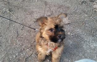 beitragsbild-floffis-tagebuch-tag3neu-1-e1530777420849 Floffis Hundetagebuch - Geschichte einer beschlagnahmten Welpe