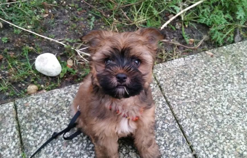 beitragsbild-floffis-tagebuch Shih Tzu Zausels Hundetagebuch