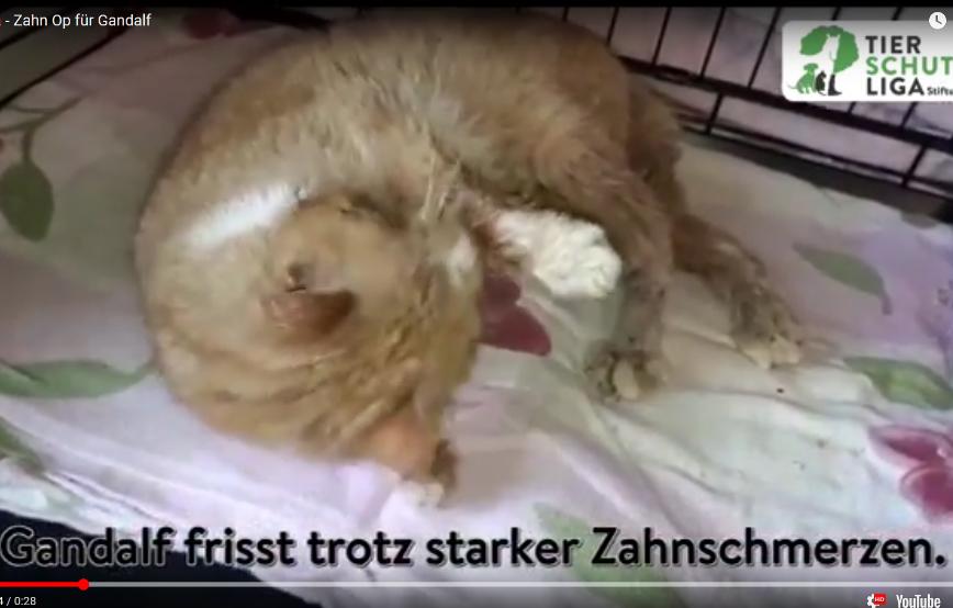 beitragsbild-gandalf-hund-zähne-faul Gnadenhof für alte Hunde in Breitenberg - Tierparadies