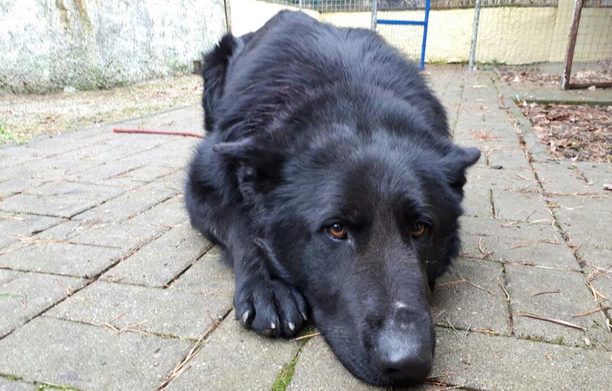 beitragsbildtibor-schäferhund-angst Startseite Tierschutzliga Stiftung