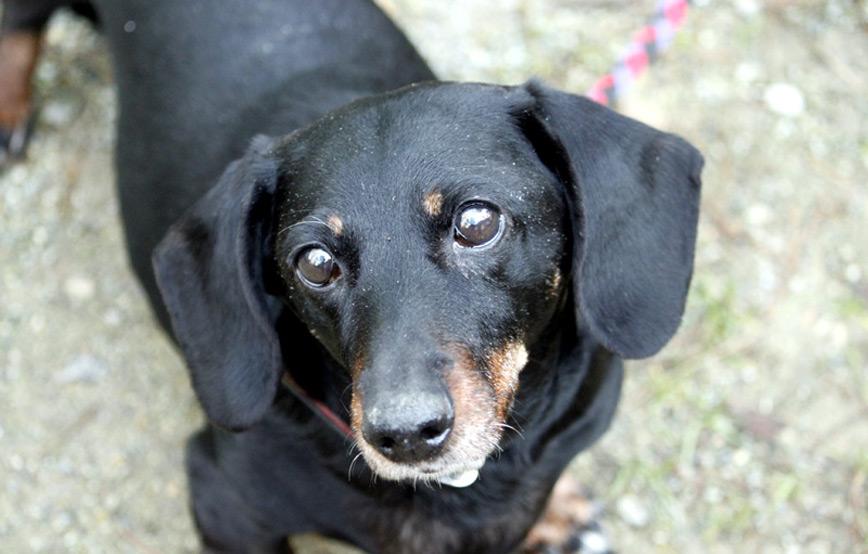 Hund-Nelly-trauriges Trauriges - wenn ein Tier die Regenbogenbrücke überquert