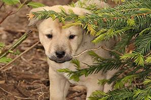 Hund-welpe-Arya-wald Das Tierheim