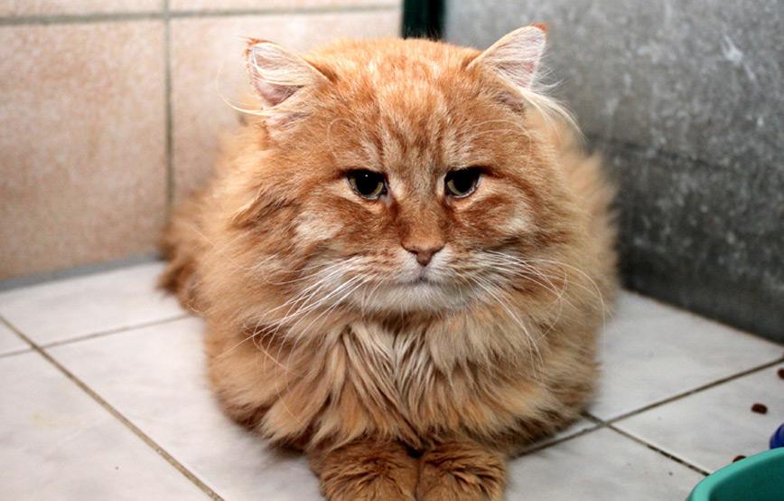 Katze-Aragon-auf-Fliesenboden-trauriges Trauriges - wenn ein Tier die Regenbogenbrücke überquert