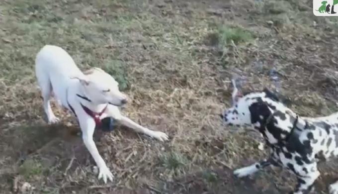 beitragsbild-angsthund-anton-piper-tagebuch-tag18 Vom Angsthund zum glücklichen Hund