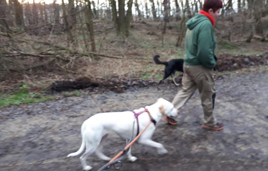 beitragsbild-angsthund-resozialisierung-piper-tagebuch-tag13 Vom Angsthund zum glücklichen Hund