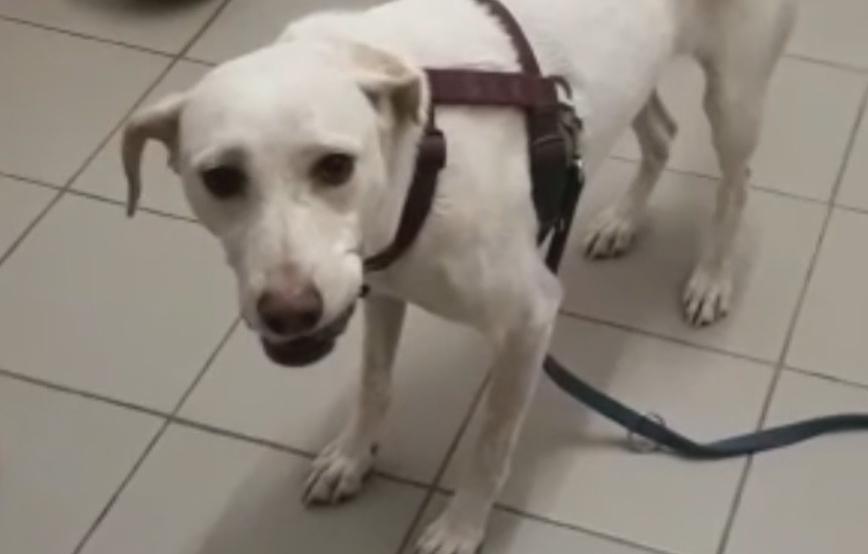 beitragsbild-glücklicher-hund-piper-tagebuch-tag14 Vom Angsthund zum glücklichen Hund