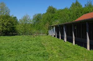 hundeboxen-auslauf-tierheim-bueckeburg Das Tierheim Bückeburg