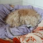 omi-julia-augen-körbchen-150x150 Julias Leben ist gerade aus den Fugen geraten – Altenpfleger gesucht!