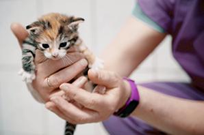 suesses-katzenbaby-hand Das Tierheim