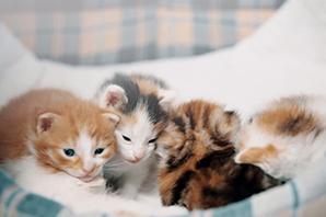 vier-katzenbabys-kuscheln-decke Das Tierheim Bückeburg