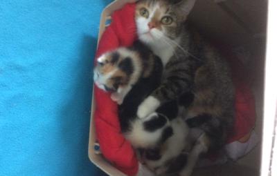 5-babyktzen-beitragsbild 5 neugeborene Babykatzen suchen Start-ins-Leben-Paten