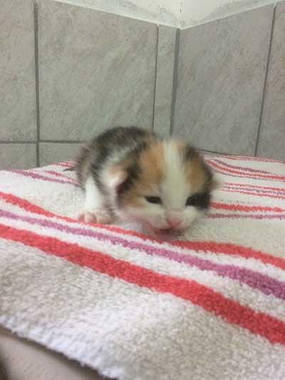 baby1 5 neugeborene Babykatzen suchen Start-ins-Leben-Paten