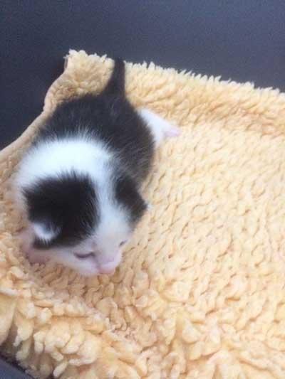 baby2 5 neugeborene Babykatzen suchen Start-ins-Leben-Paten