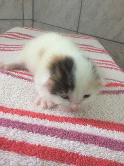 baby3 5 neugeborene Babykatzen suchen Start-ins-Leben-Paten