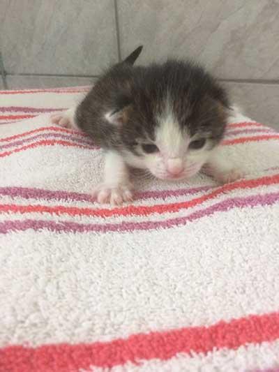 baby4 5 neugeborene Babykatzen suchen Start-ins-Leben-Paten