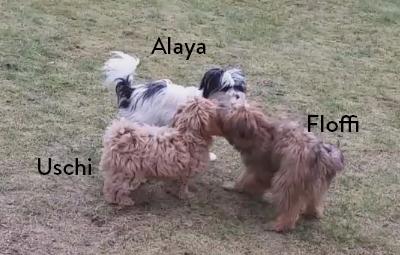 floffi-welpenschule-monat-25-beitragsbild Floffis Hundetagebuch – 1.  Monat
